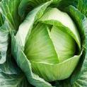 Bắp cải: Vị thuốc thần kỳ chữa bệnh dạ dày và phòng chống ung thư