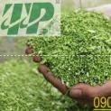 Địa chỉ bán hoa hòe tại Quảng Nam tăng cường sức khỏe