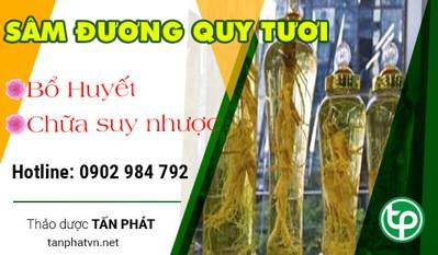tac dung sam duong quy