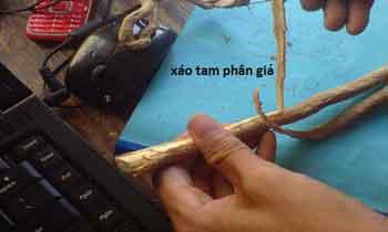 xao-tam-phan-gia